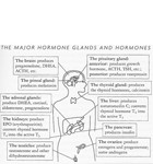 hormone-graphic_featured